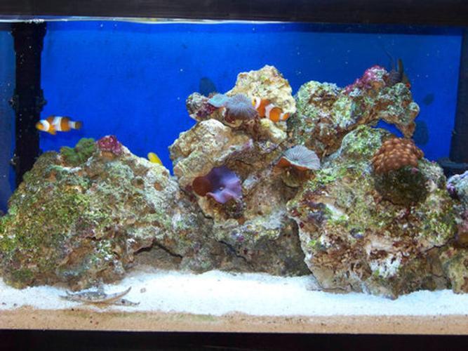 What is an Aquarium Sump?