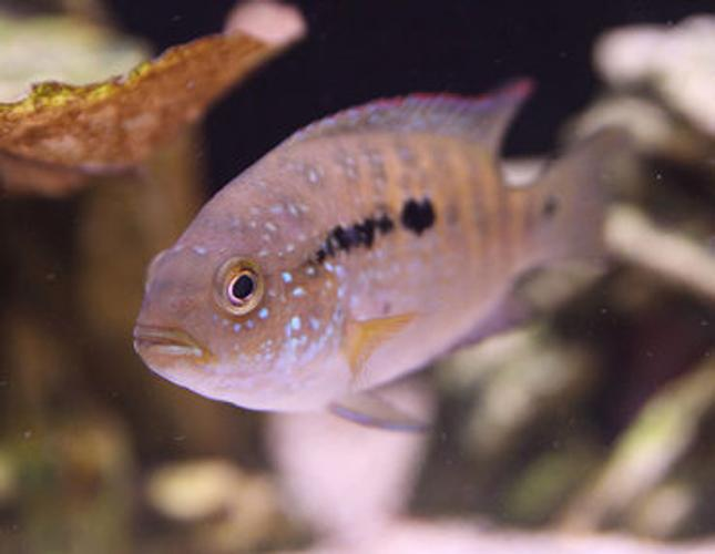 How Cycling the Tank Can Stress Your Fish
