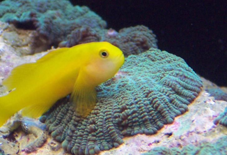 Trending: Colorful Species for the Marine Tank