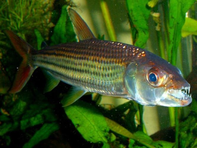 AQUASCAPING TIPS TO REDUCE AGGRESSION IN FISH