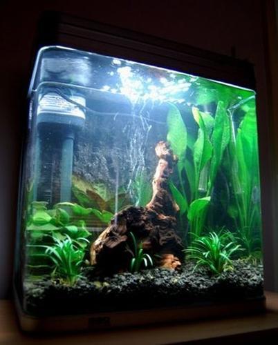 All Glass Aquariums