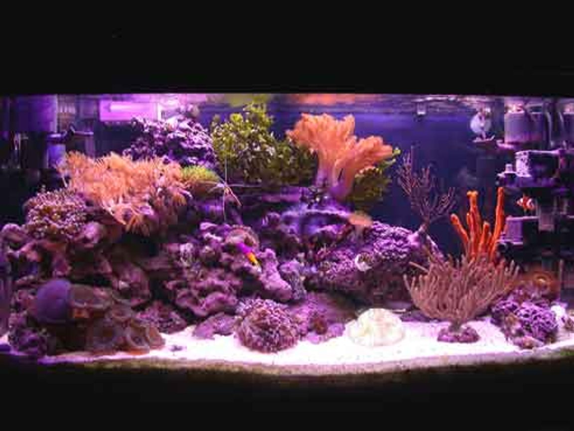 reef tank (mostly live coral and fish) - 40 gallon reef tank. No sump, no refugium.