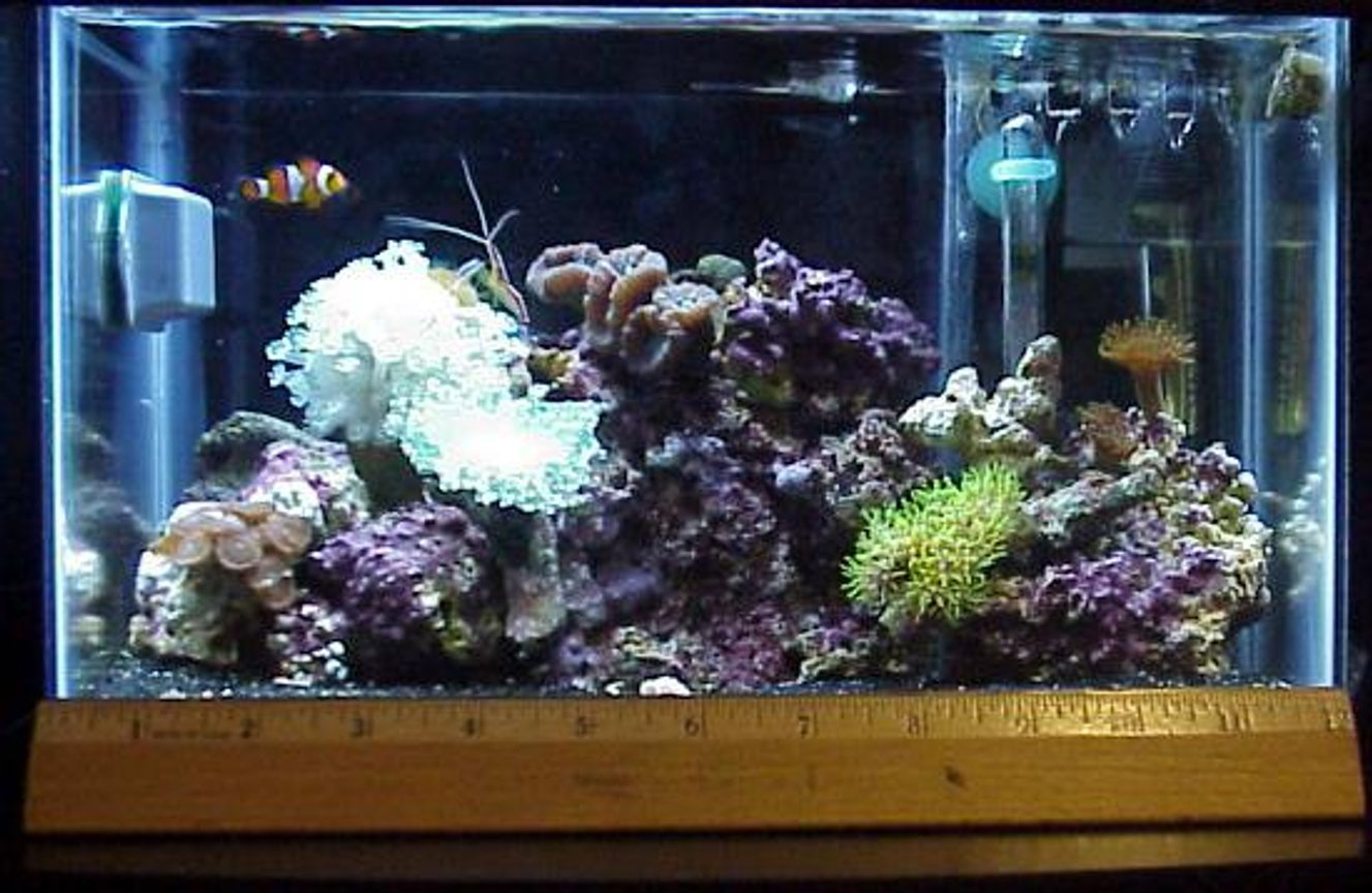 reef tank (mostly live coral and fish) - 2.5 gal tank, 3x 13watt lights, a 50 watt heater, mini HOB filter, small assorted corals, 1 O. Clown and 1cleaner shimp