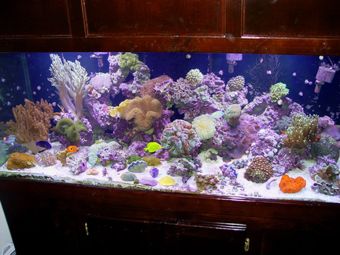 reef tank (mostly live coral and fish) - 150g reef tank