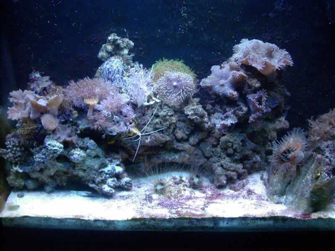 reef tank (mostly live coral and fish) - 37 show.