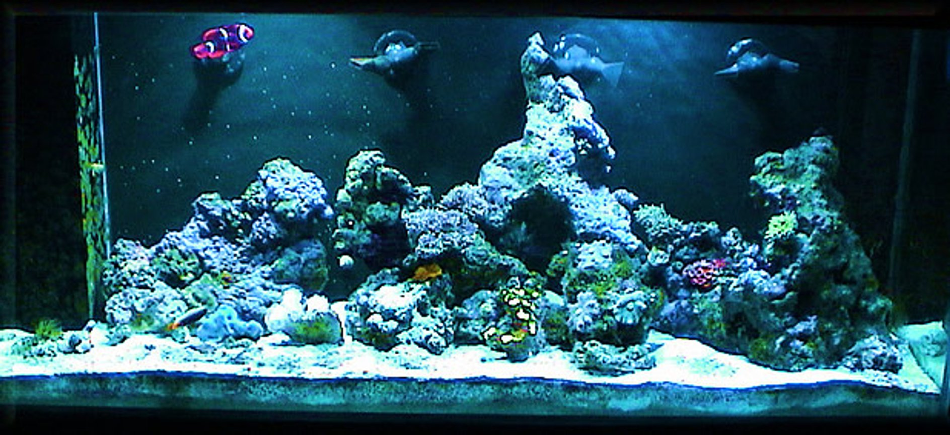 reef tank (mostly live coral and fish) - 60 AGA, 30g sump, Euro-Reef CS6-2, dual IceCap 12K Sunburst MH lighting.