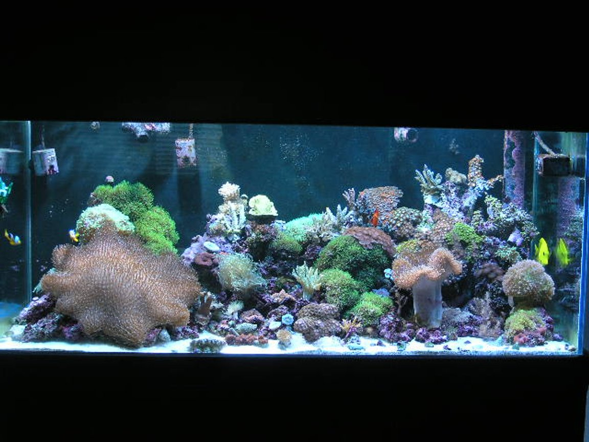 reef tank (mostly live coral and fish) - 90 Gallon Reef Tank 2 X 175W 12K Halides, 2 X 55W Blue Power Compacts, 2 X 55W 50/50 Power Compacts, 2 X 90W Actinic VHO's...