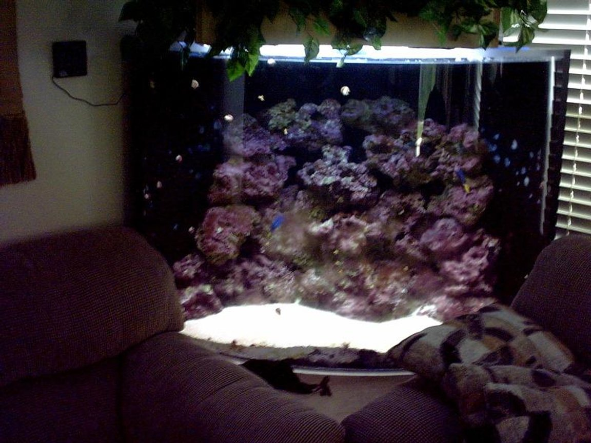 reef tank (mostly live coral and fish) - 160 Gal corner bow front 1 inch acrylic 4- 55 watt pc's 2 10 k's and 2 blue top fathom skimmer in sump quiet one 1200 pump better pic soon