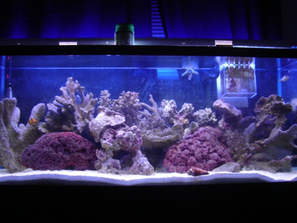 90 gallons reef tank (mostly live coral and fish) - k