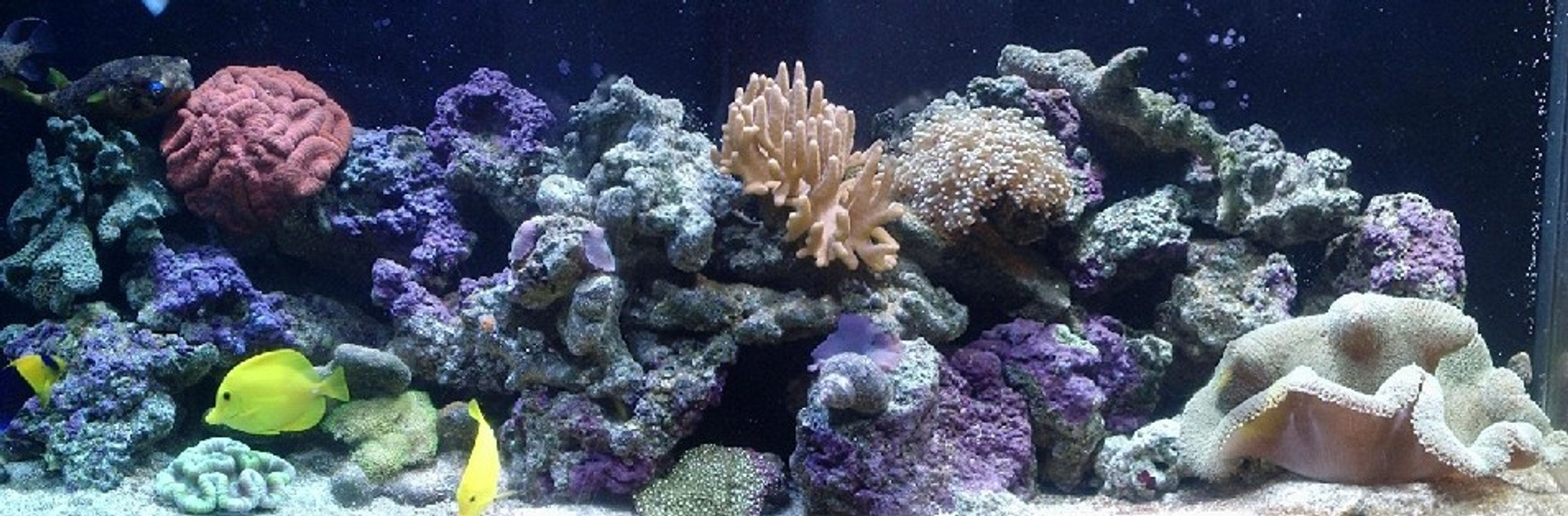 110 gallons reef tank (mostly live coral and fish) - My tank