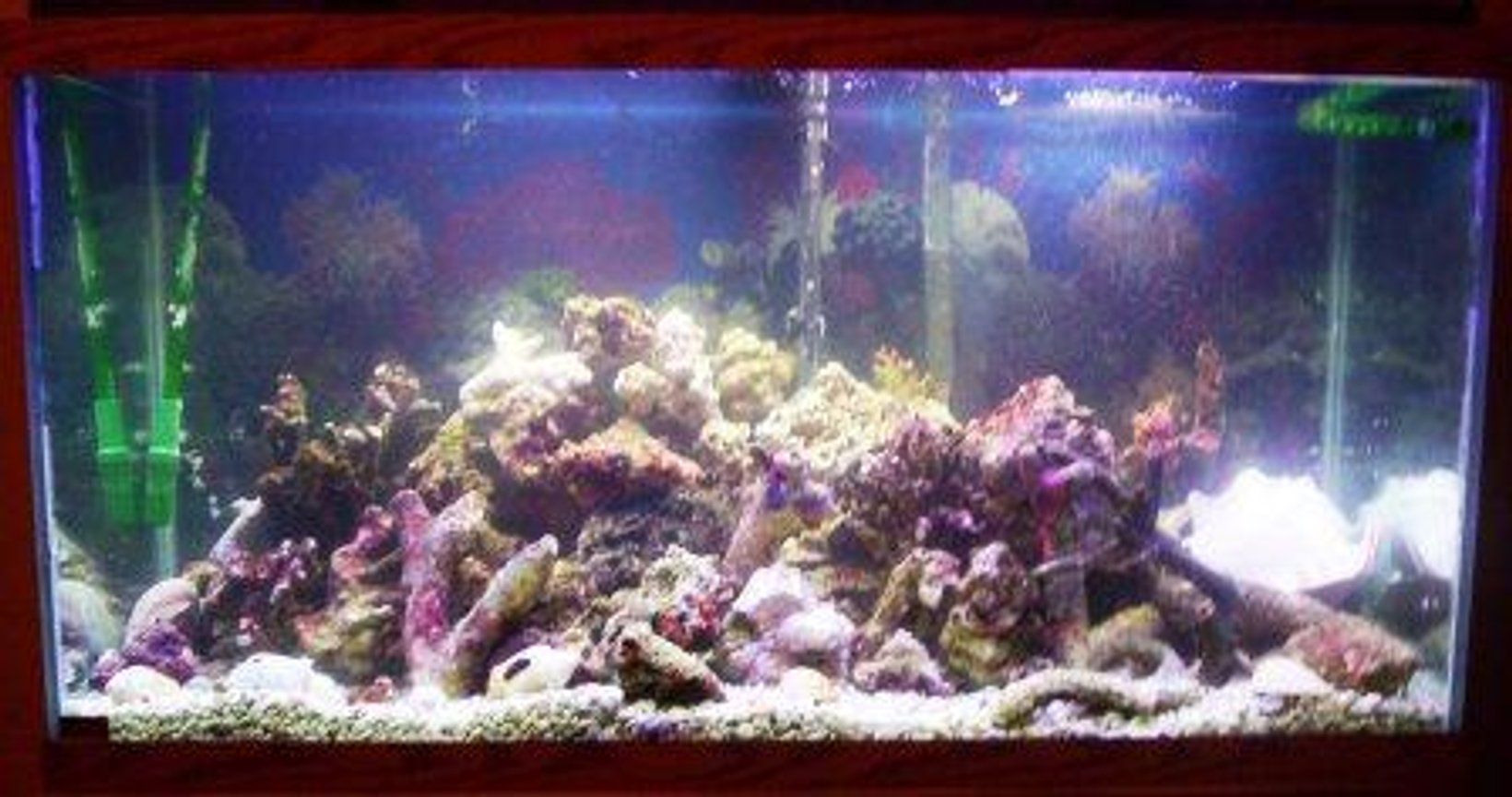 90 gallons reef tank (mostly live coral and fish) - 90 gal reef tank. No fish yet just getting started.