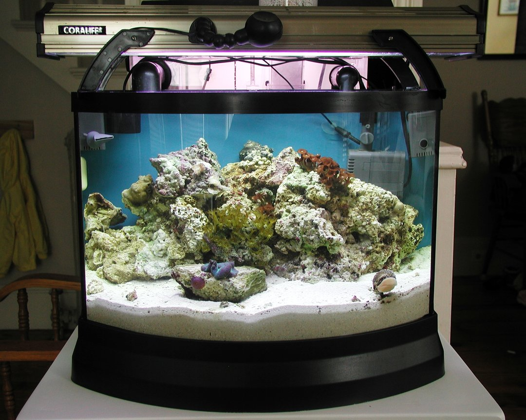 reef tank (mostly live coral and fish) - Mini Bow Reef Tank