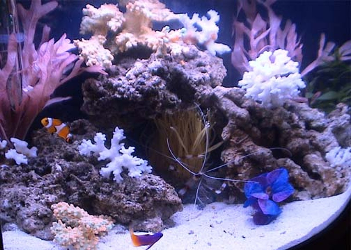 "7 gallons reef tank (mostly live coral and fish) - The 7 gallon mini-bow that everyone said would be impossible to keep...goin on 1 month now...no problems!! ""Knock on Wood!"""