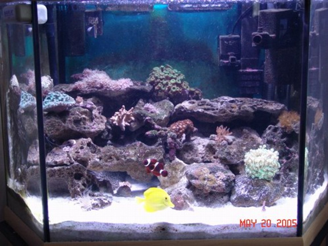 40 gallons reef tank (mostly live coral and fish) - full tank shot