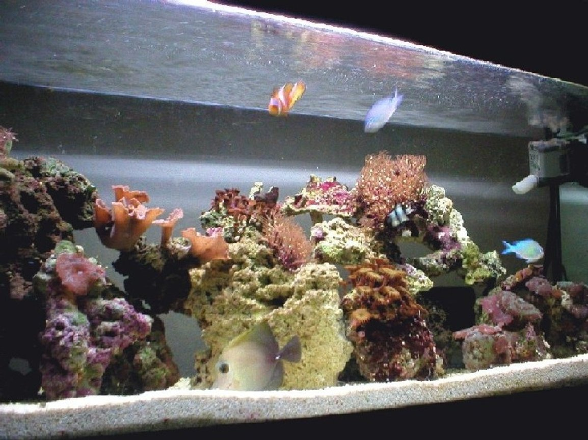 27 gallons reef tank (mostly live coral and fish) - 27 gallon running for more than 6 months, started as a 4 gallon nano.