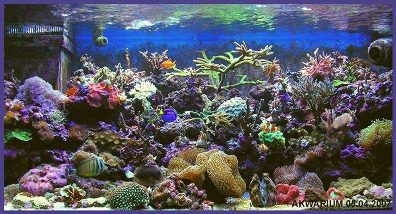 540 gallons reef tank (mostly live coral and fish) - my new tank vol 2