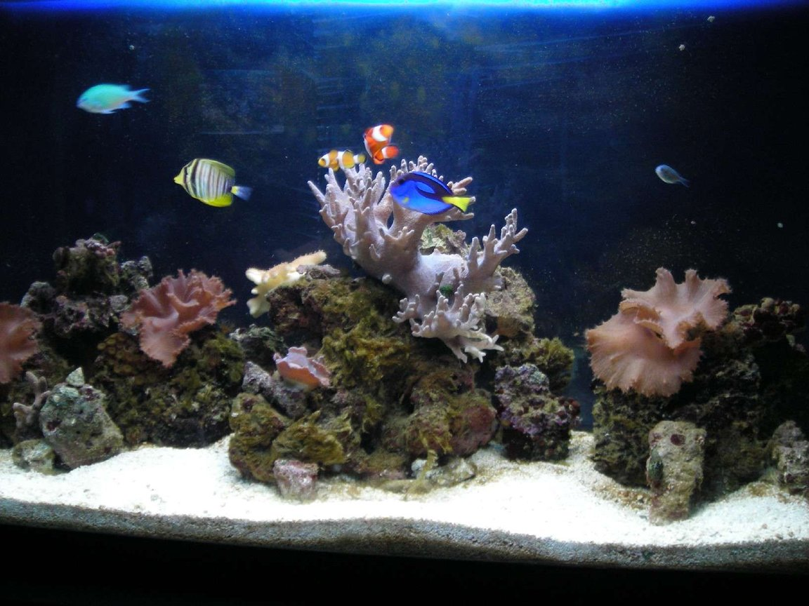 27 gallons reef tank (mostly live coral and fish) - 55 reef tank