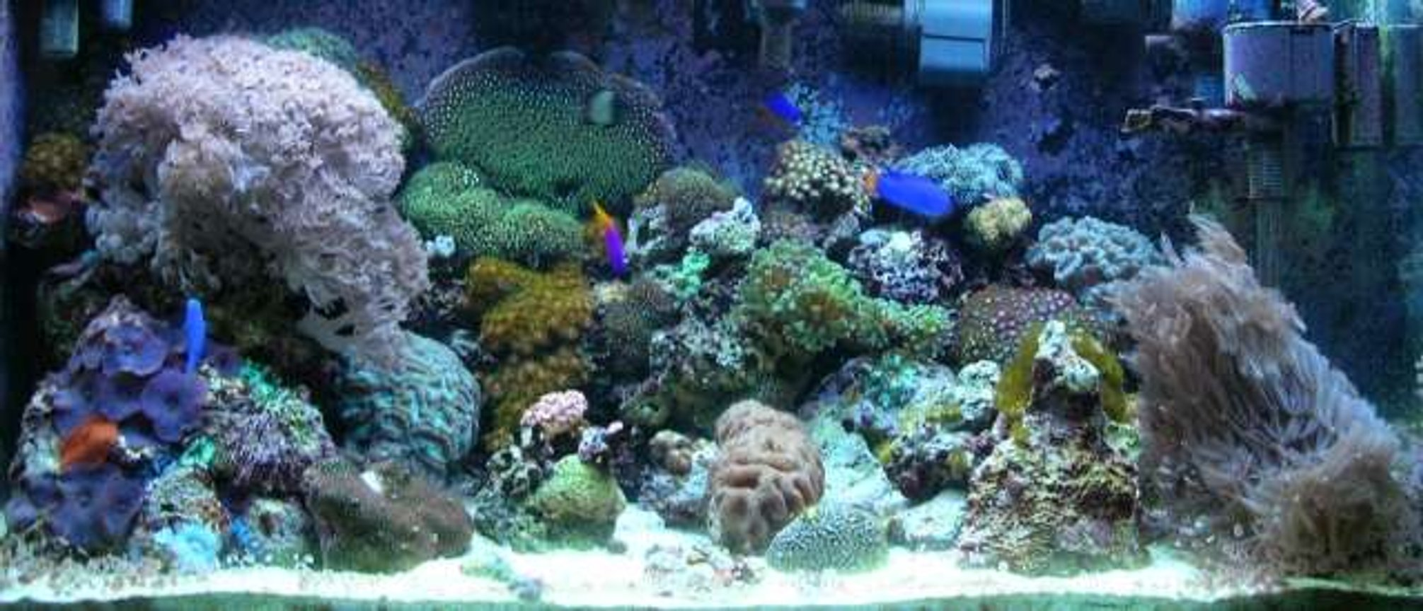 180 gallons reef tank (mostly live coral and fish) - 65gal Reef Tank (LPS, soft corals, several damsels and a royal gramma. Equipment (288watts PC; AquaC protein skimmer, AquaFuge HOB refugium, Phosban Reactor, circulation ~25x, sumpless set up)