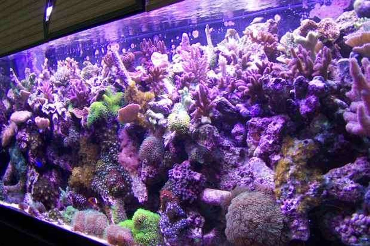 125 gallons reef tank (mostly live coral and fish) - 125g`reef