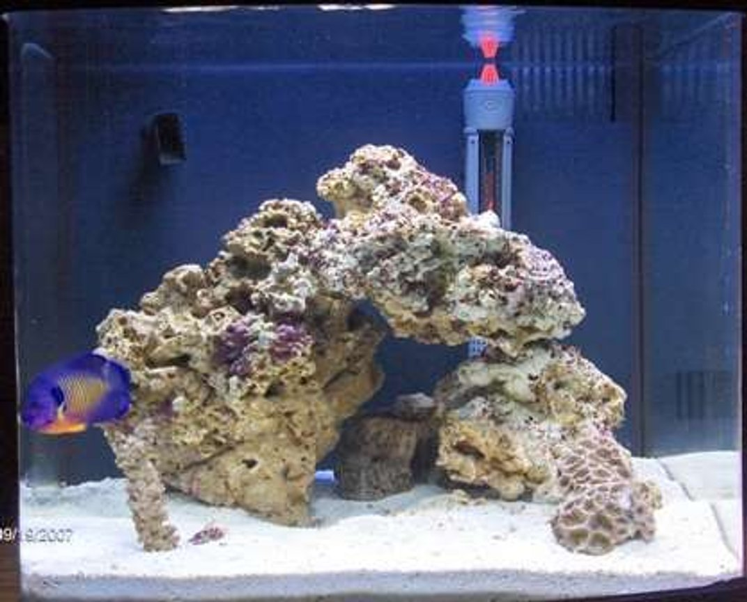 14 gallons reef tank (mostly live coral and fish) - new pic with coral beauty in it!