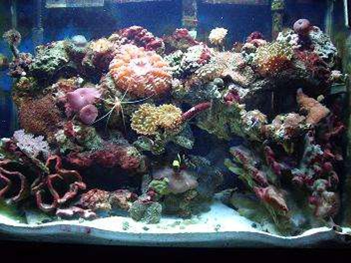 37 gallons reef tank (mostly live coral and fish) - 37 gallon up for allmost 4 years now