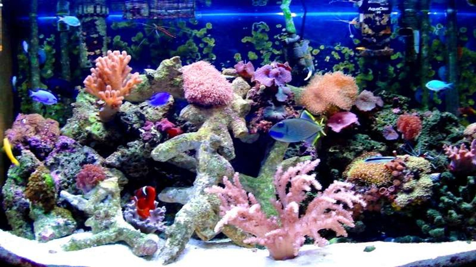 46 gallons reef tank (mostly live coral and fish) - 46 bow reef tank