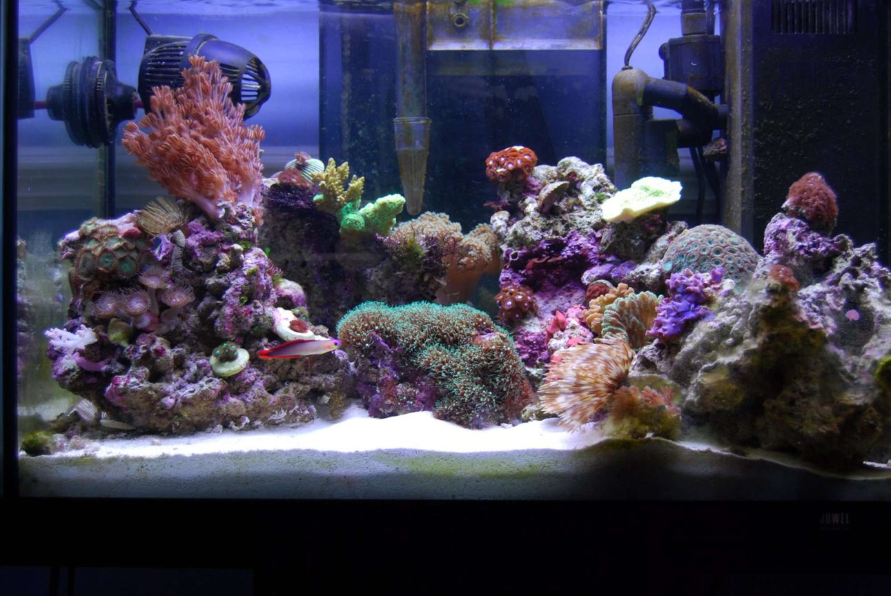15 gallons reef tank (mostly live coral and fish) - My beautiful piece of heaven