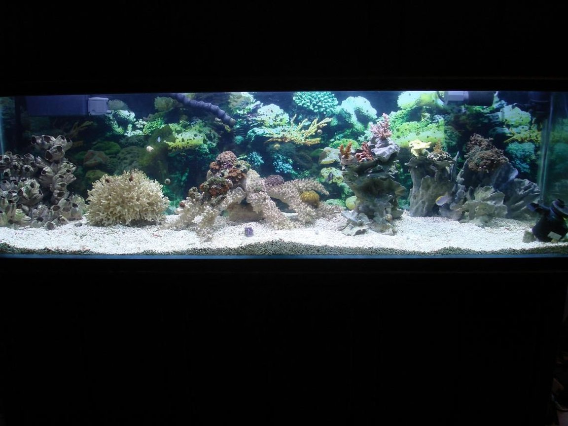 125 gallons reef tank (mostly live coral and fish) - the tank