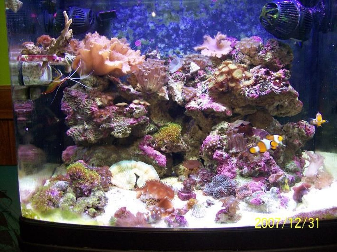 reef tank (mostly live coral and fish) - FTS.