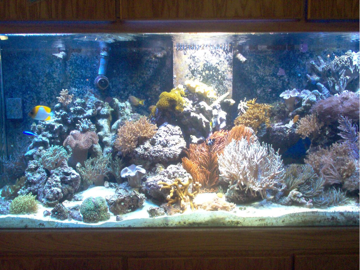 75 gallons reef tank (mostly live coral and fish) - 220 Reef