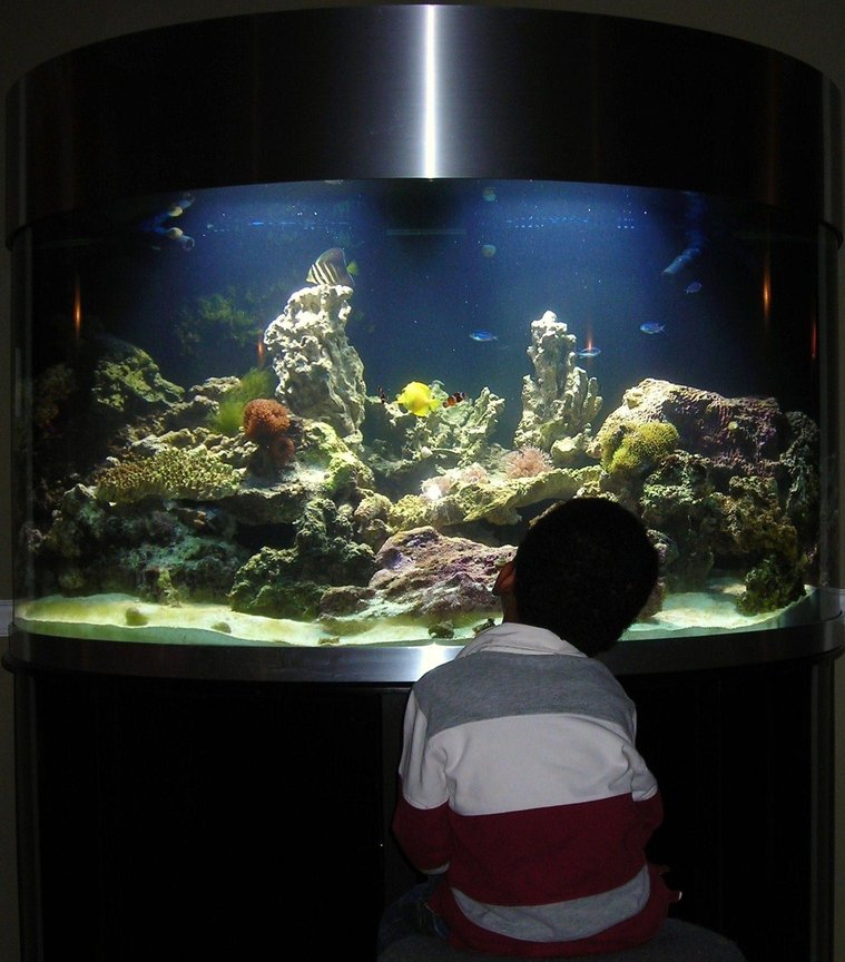 144 gallons reef tank (mostly live coral and fish) - Mesmerised by it all...