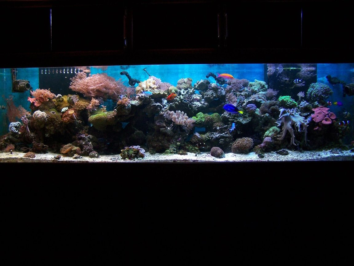 240 gallons reef tank (mostly live coral and fish) - full tank shot