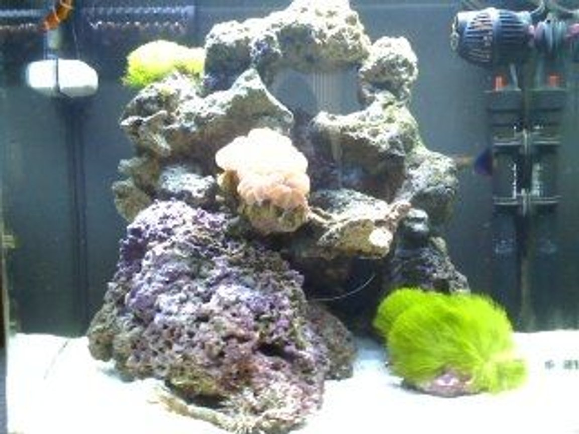 24 gallons reef tank (mostly live coral and fish) - 24gal Nano cube(4months old)