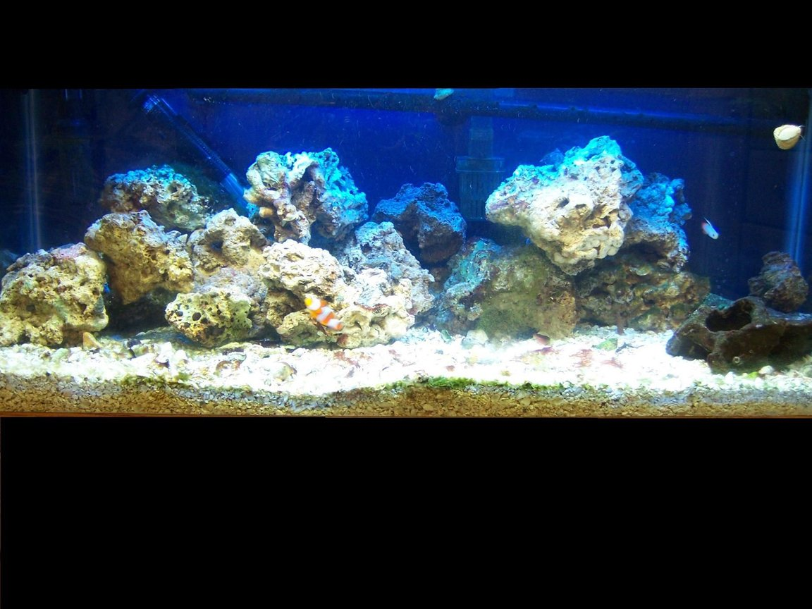30 gallons reef tank (mostly live coral and fish) - An updated pic of my tank..