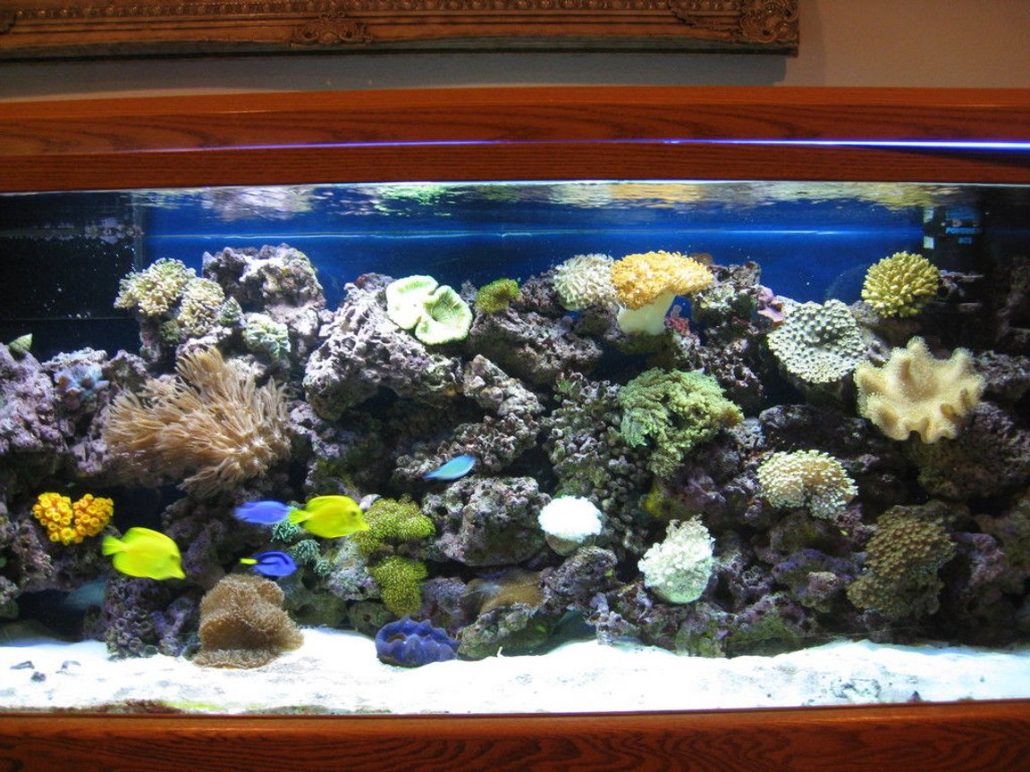 120 gallons reef tank (mostly live coral and fish) - 48 coralife light with lunar light,80 lbs live sand,250 lbs live rock,sump filter with protein skimmer and coralife uv light,3 regular powerhead.