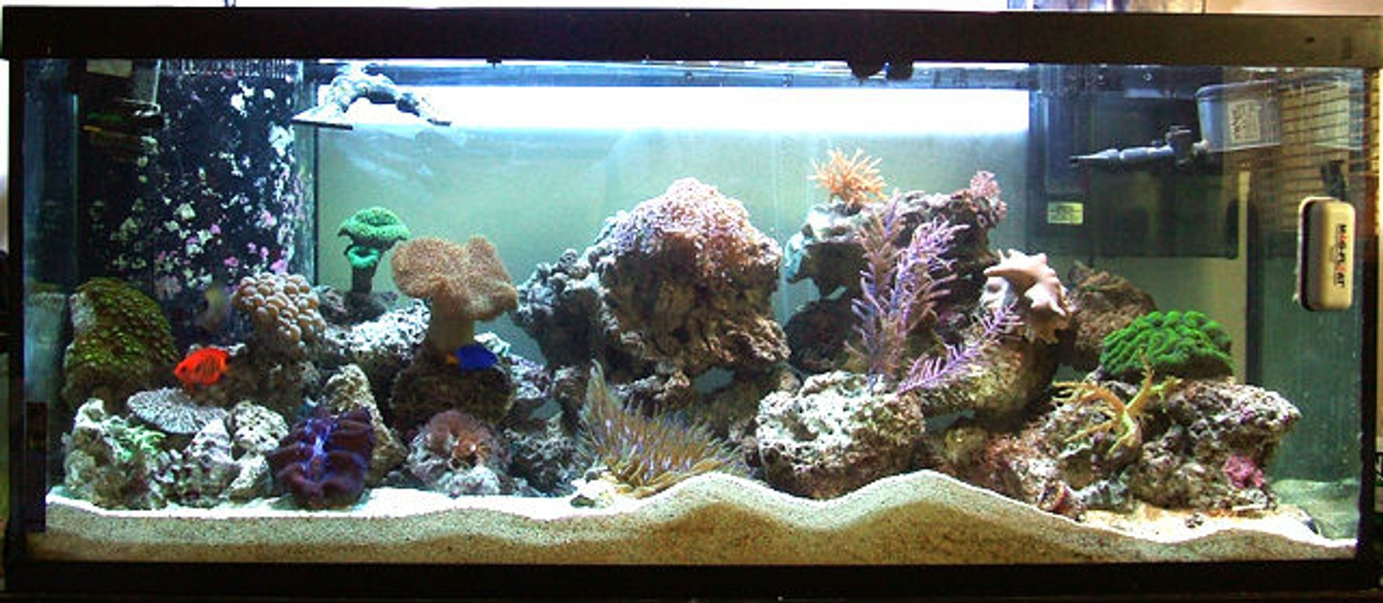 75 gallons reef tank (mostly live coral and fish) - Overall aquarium photo