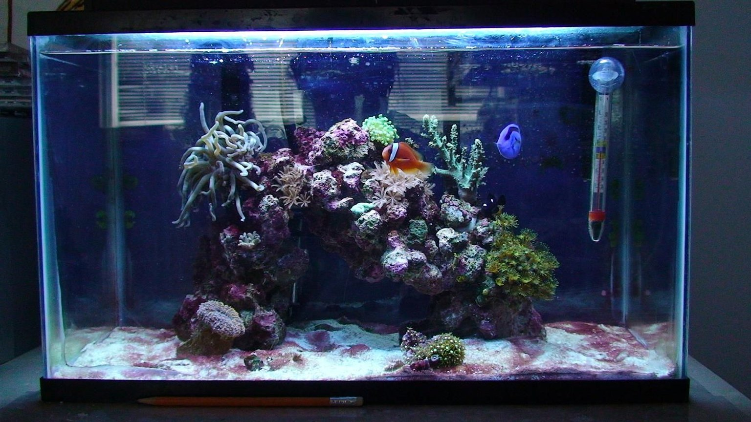 10 gallons reef tank (mostly live coral and fish) - This is my 10 gallon reef tank, see my profile for more details. I spent $100 Canadian for the entire set up. The lady couldn't get rid of the cyanobacteria, so I bought the tank. I am currently working on getting rid of the cyano bacteria.