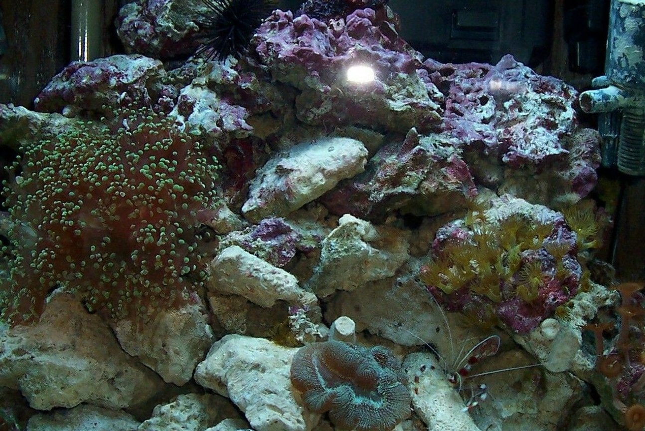 15 gallons reef tank (mostly live coral and fish) - my 15 gallon reef tank