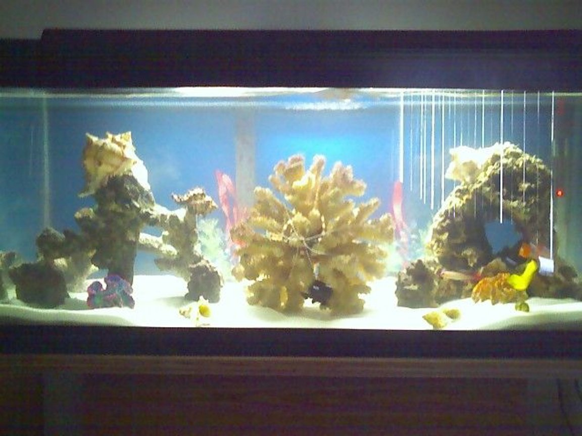 30 gallons reef tank (mostly live coral and fish) - updated pic of my 30gallon salt.