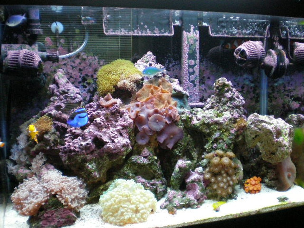 20 gallons reef tank (mostly live coral and fish) - after 7 months