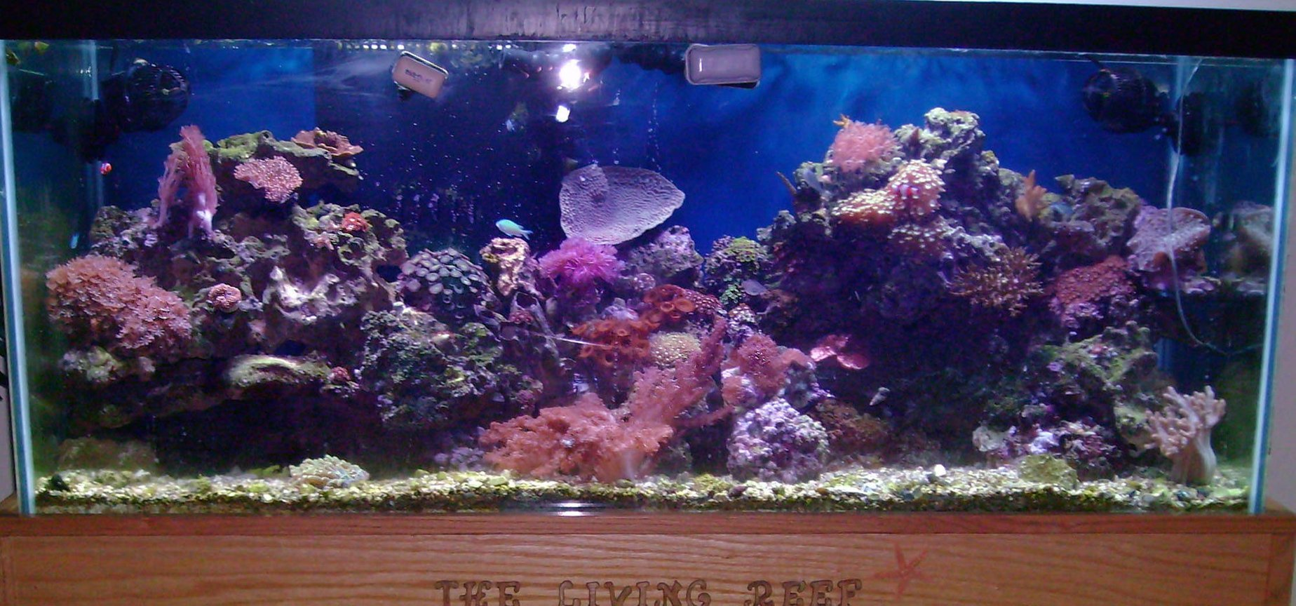 75 gallons reef tank (mostly live coral and fish) - 75 Gallon Mixed Reef