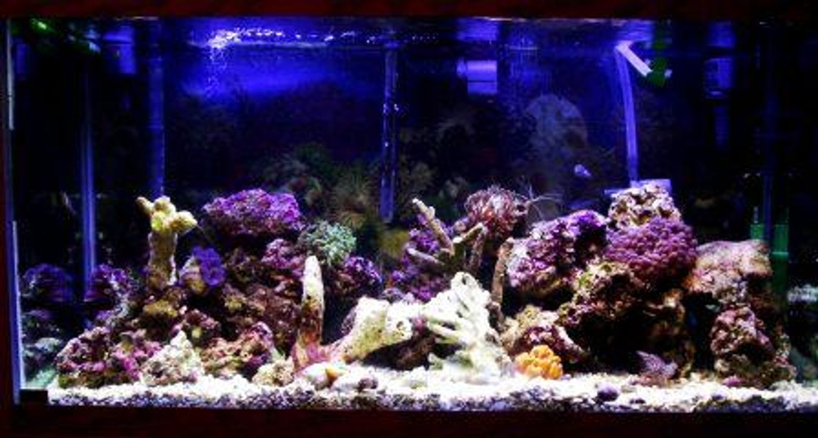 90 gallons reef tank (mostly live coral and fish) - 90 gal reef tank, 320 watt 50/50 Smart Lite System, eheim professional II filter. Protein Skimmer, Uv Light, Several Power Heads 11-14-05