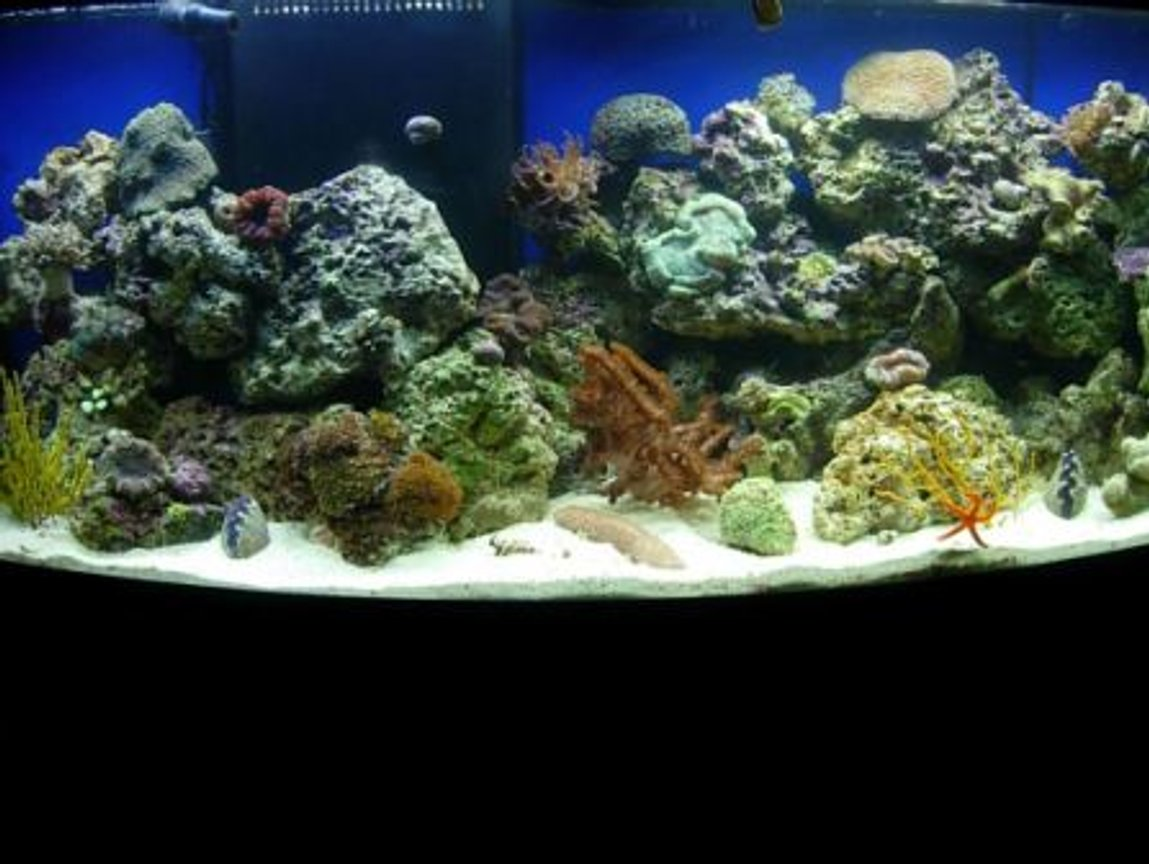 72 gallons reef tank (mostly live coral and fish) - still learning...reef tank in progress