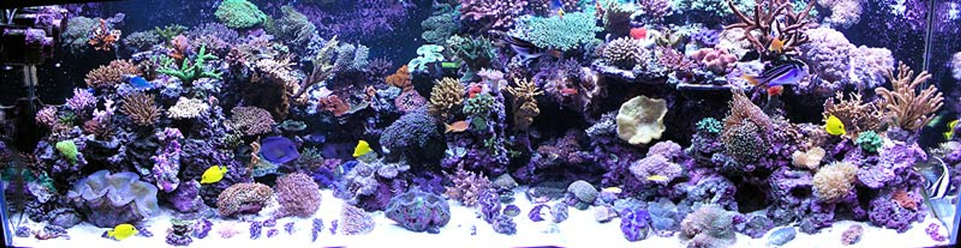 500 gallons reef tank (mostly live coral and fish) - Full reef tank pic. Over 100 coral and 50 fish