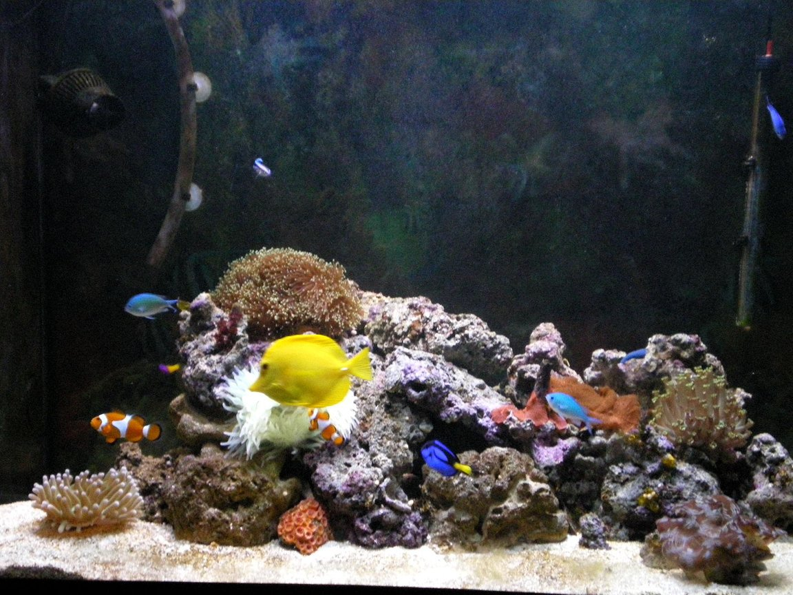 90 gallons reef tank (mostly live coral and fish) - My Reef Tank, I hope you like it!!