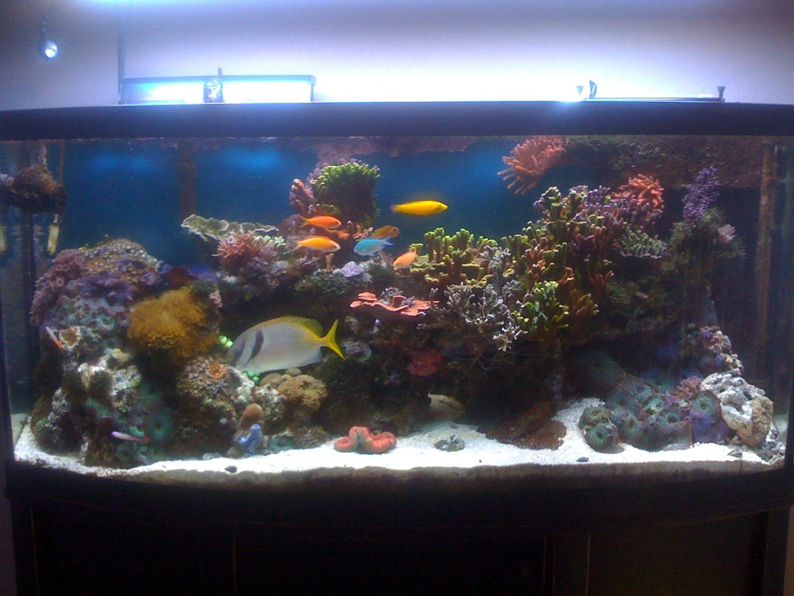 72 gallons reef tank (mostly live coral and fish) - 72 Gallon Bowfront -- established 4 years ago