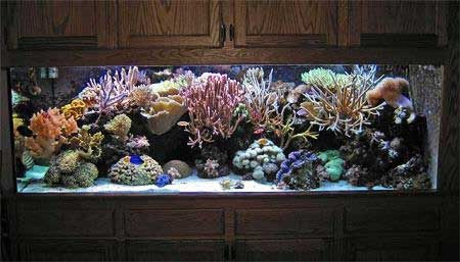 55 gallons reef tank (mostly live coral and fish) - this is my 55 gallon reef tank