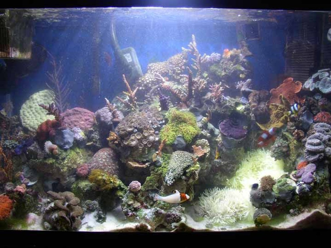 29 gallons reef tank (mostly live coral and fish) - 29 gallon mixed reef tank. tank is 3mths old