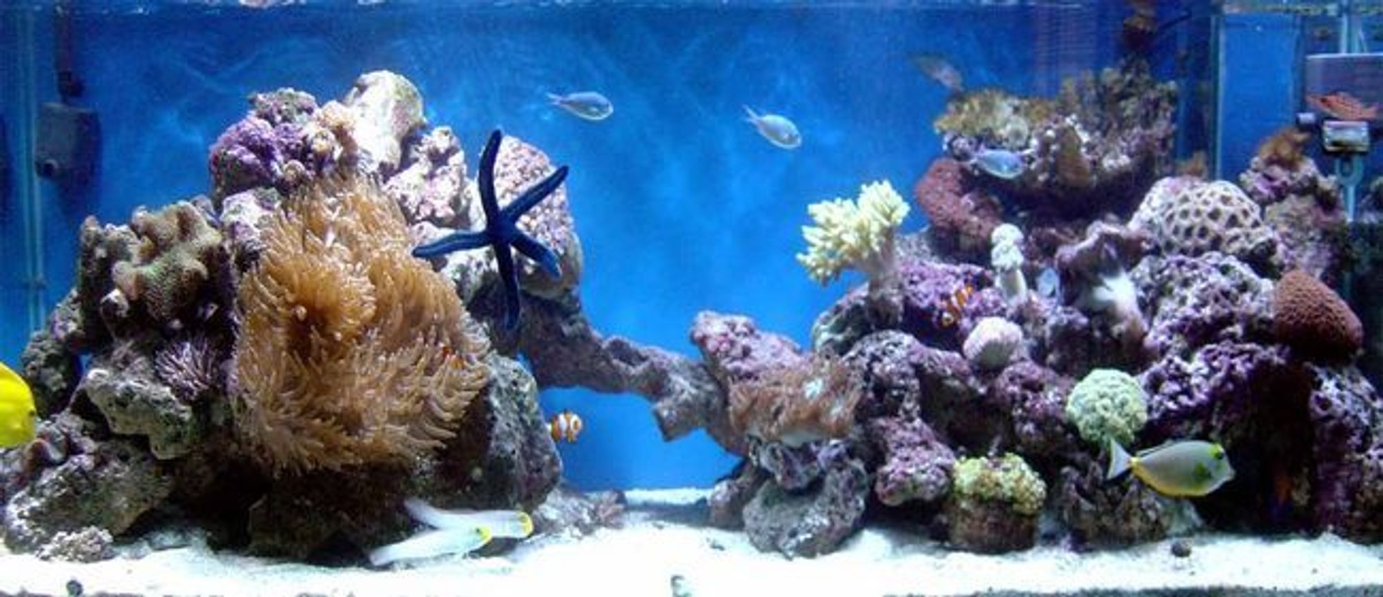 185 gallons reef tank (mostly live coral and fish) - update