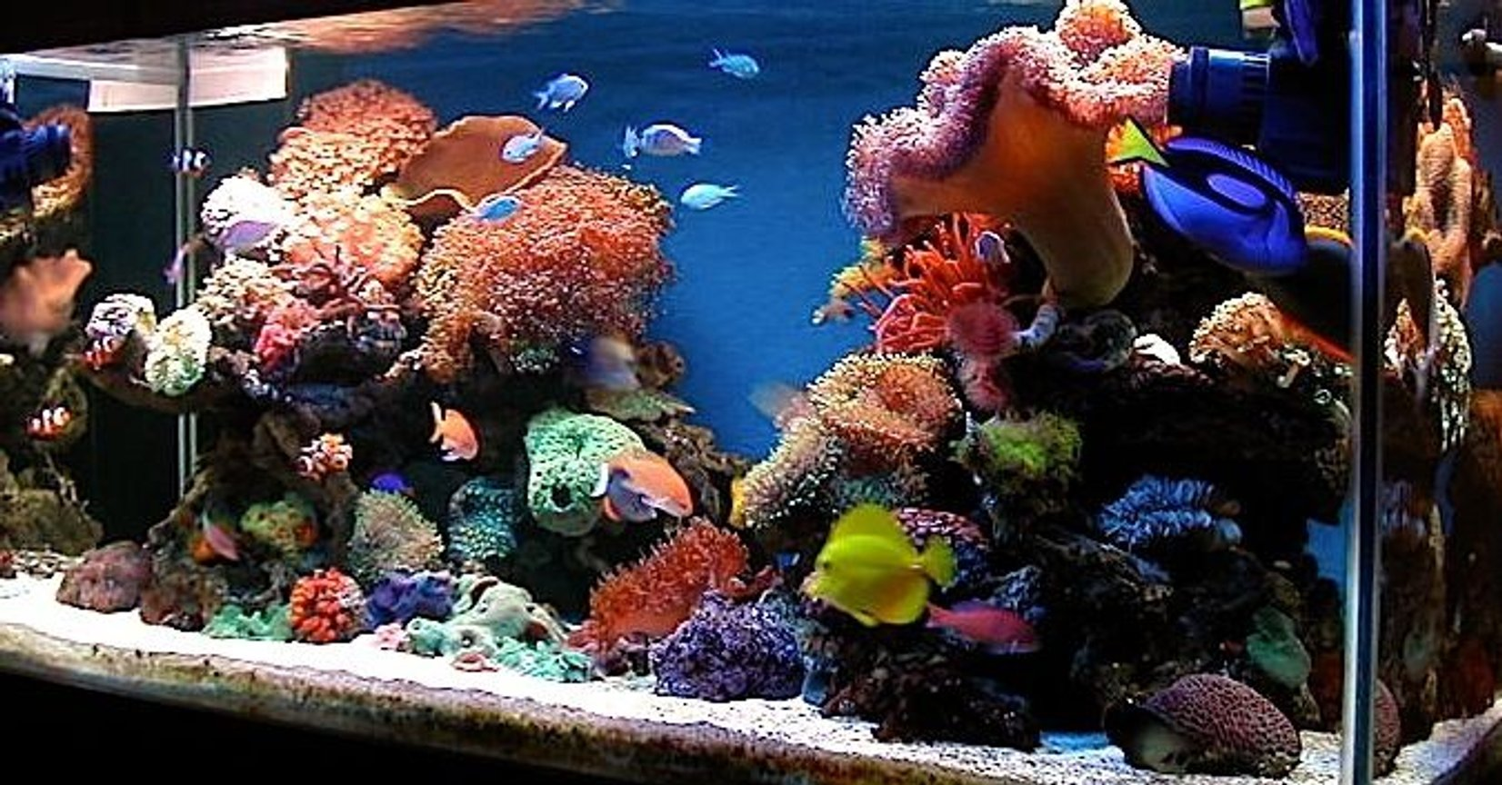 150 gallons reef tank (mostly live coral and fish) - latest update